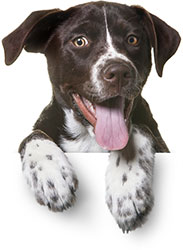 Buy Dog Food Online In India