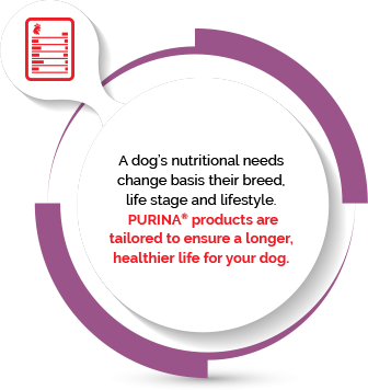 Considering a dog's changing nutritional